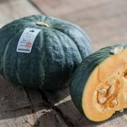 Specialty Pumpkin Zucca